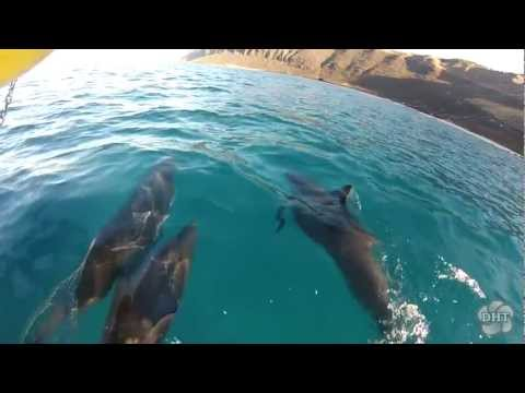 Wild Dolphins & Turtle Snorkel Swim in Hawaii
