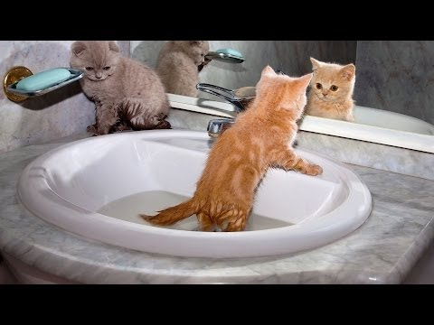 How to Teach Cat to Enjoy Stuff He Hates | Cat Care
