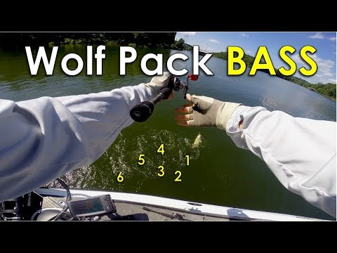 Shallow Water Techniques for Clear Lakes in the Summer - Beaver Lake Summer Bass Fishing