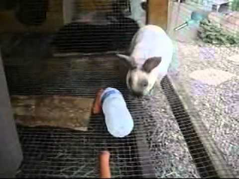 How to keep a bunny cool in the summer idea by Freedoms Garden