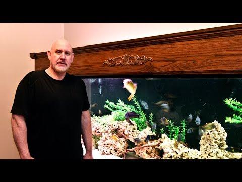 Ethan's 300-gallon Cichlid Display