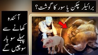How Broiler Chickens are Produced and Effects Your Body | Urdu / Hindi