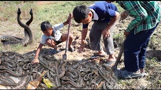 Wow!! 3 Amazing Children Catch Many Snakes With Bare Hand In Cambodia