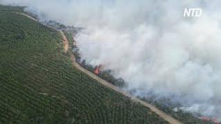 На Галлиполи горят леса, турецкий полуостров окутал дым