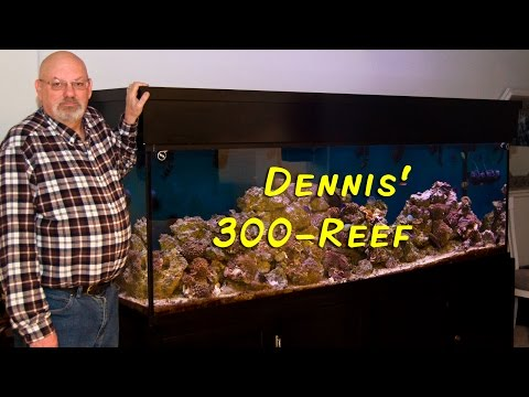 Dennis Henke's Reef