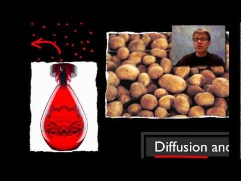 AP Biology Lab 1: Diffusion and Osmosis