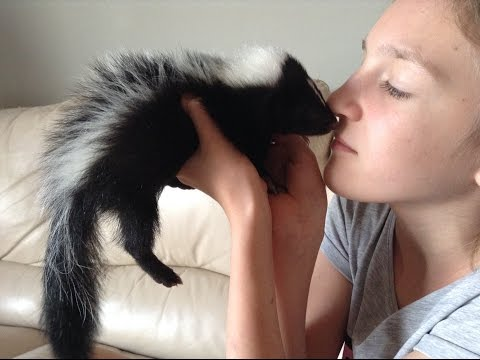Cute baby skunks, love to play !!!