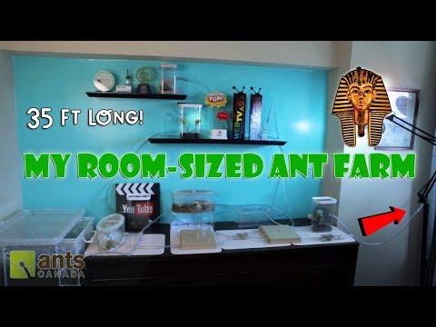 New ROOM-SIZED Ant Farm | Pharaoh Ants