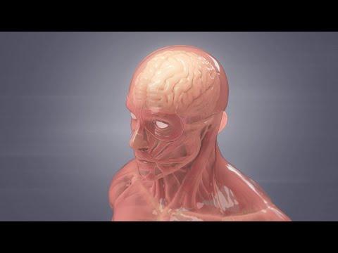 How Meningitis Spreads | WebMD