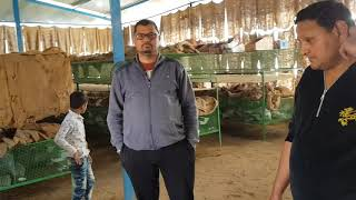 Successful and satisfied Rabbit farms of Gujrat 9571481888