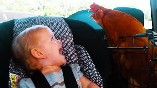 El Momento Más Divertido Entre Bebés Y Pollo #5   Compilación de Bebés Divertidos