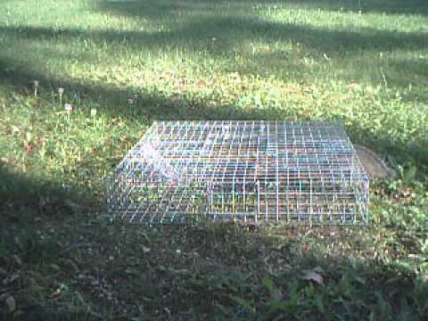 Mulitple Catch Squirrel / Rodent Trap With Large Holding Area