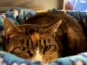 Paige was a Pregnant Stray Cat noahs kingdom humane society
