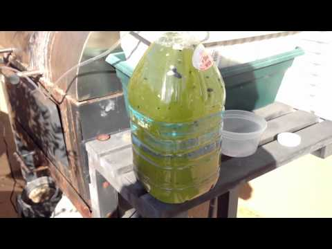 DIY green water from fresh water