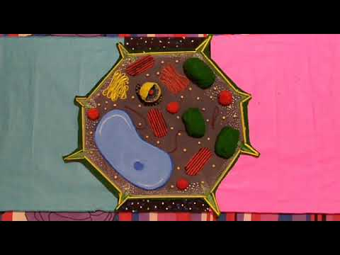 HOW TO MAKE AN AMAZING!!! 😮 PLANT CELL MODEL AT HOME!!!