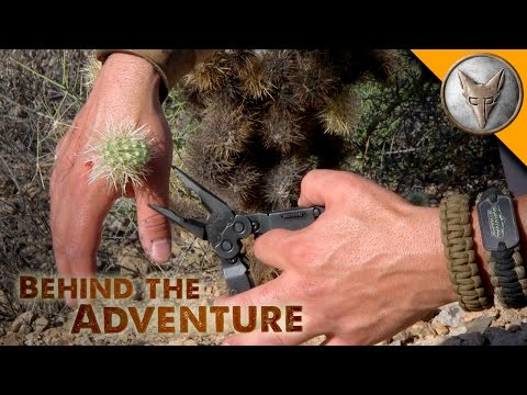 Ouch! Jumping Cactus Attack!
