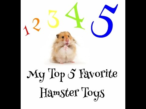 My Top 5 Favorite Hamster Toys
