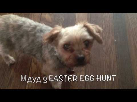 Maya the Puppy on an Easter Egg Hunt