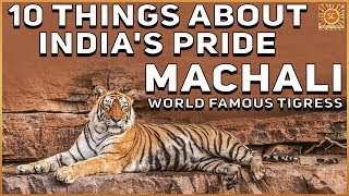 10 Things about India's Pride -  Machali the world famous tigress