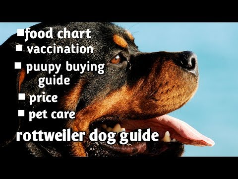Rottweiler dog guide in Hindi II Puppy buying guide II Vaccination II Food