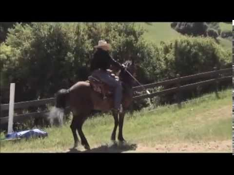 Solving Trail Problems - The Barn Sour Horse