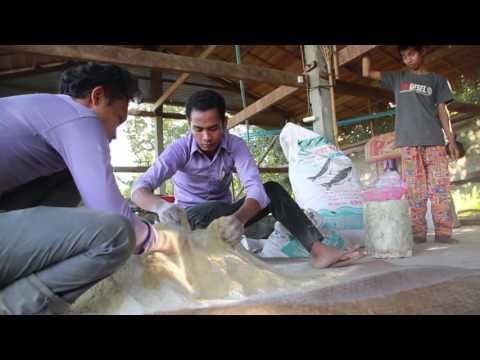 Mix Pig Food with  Khmer NGO