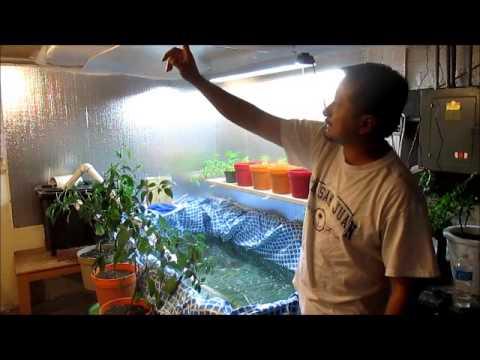 indoor greenhouse / Tilapia pond