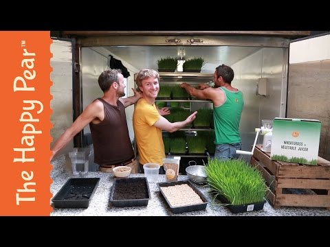 How to grow Wheat Grass - The Happy Pear