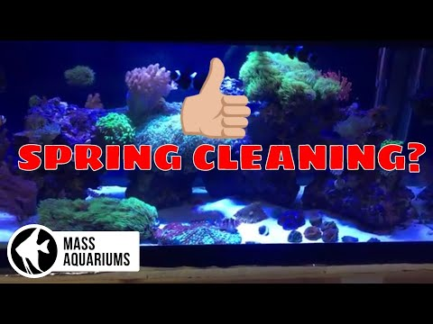 SPRING CLEANING? NOW is the time to CLEAN your AQUARIUMS!