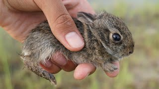 Found abandoned baby bunny while fishing!!!