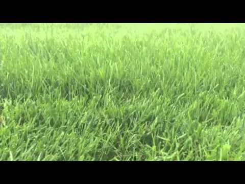Thick lawns uggggggh