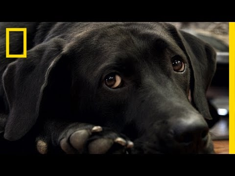 How Rescue Dogs Are Helping Veterans With PTSD | National Geographic