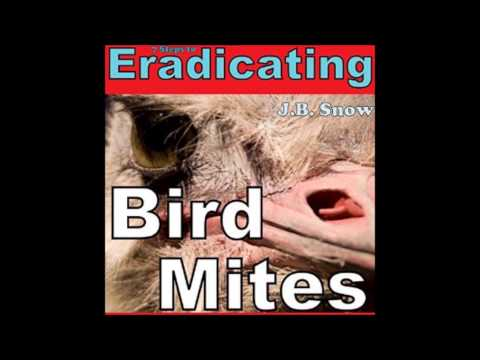 Eradicating Bird Mites