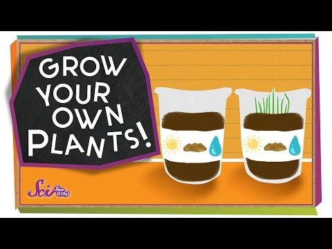 Grow Your Own Plants! - #sciencegoals
