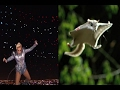 Lady Gaga the Flying Squirrel