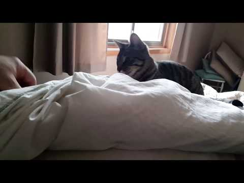 Playful Kitten Jumps on my Bed to Play