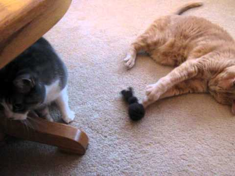 Beau and Charlotte with catnip