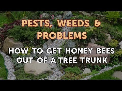 How to Get Honey Bees Out of a Tree Trunk