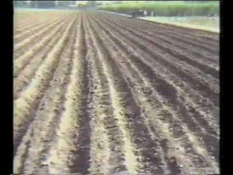 Sugarcane Production Technology Pakistan part-1 Dr.Ashraf Sahibzada