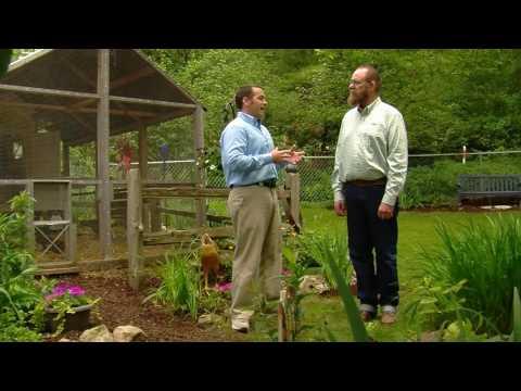 Chicken Coop Ventilation Tips