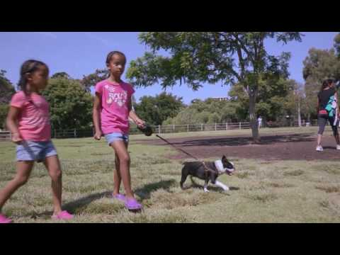 DOGTV - Stimulation: these cuties love their dog!