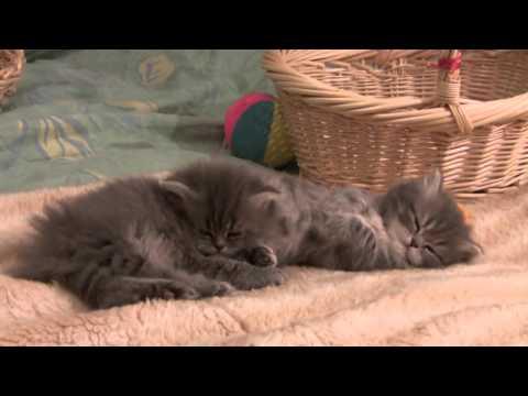 cats on Vimeo