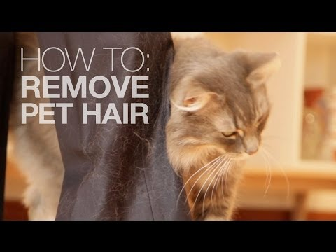 How to remove pet hair with just water