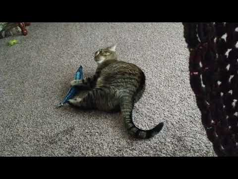 Cat Playing With Catnip Filled Toy
