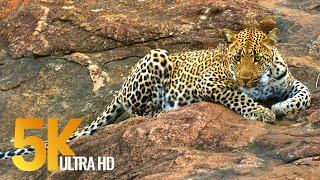 Download 5K African Wildlife - Virtual Trip to Kruger National Park in South Africa - 1.5 HRS Video