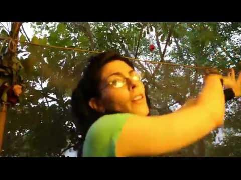 Tree House Tips~ Feeding Hummingbirds -without poisoning them!