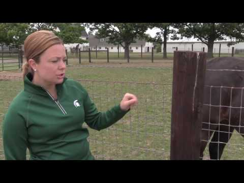 Pros and Cons of No Climb Mesh Fencing