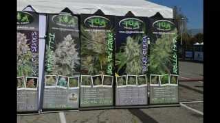 1000 Watts Magazine Presents High Times Medical Cannabis Cup La 2015 2