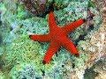 Facts: The Sea Star (Starfish)