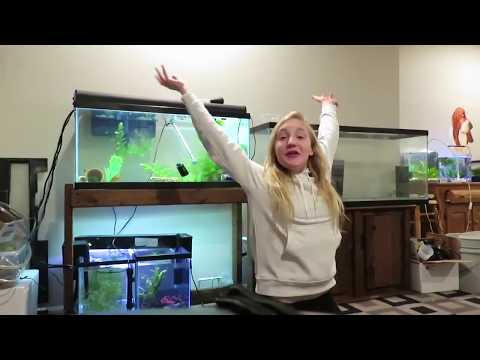 FISH ROOM TOUR\NOT YET COMPLETE